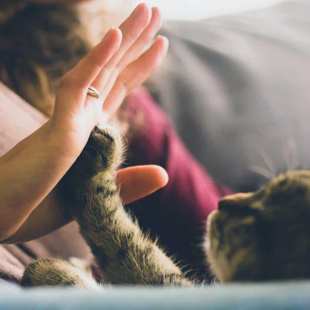 Kattenpoot-high-five